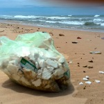 Polystyrene on Cannon Rocks beaches – Clean up